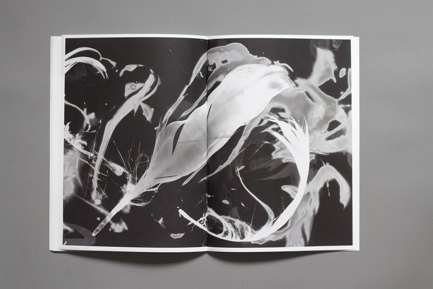 diploma, graphic design, book, Vaumarcus, photogram, feathers, liquid, black and white, memories